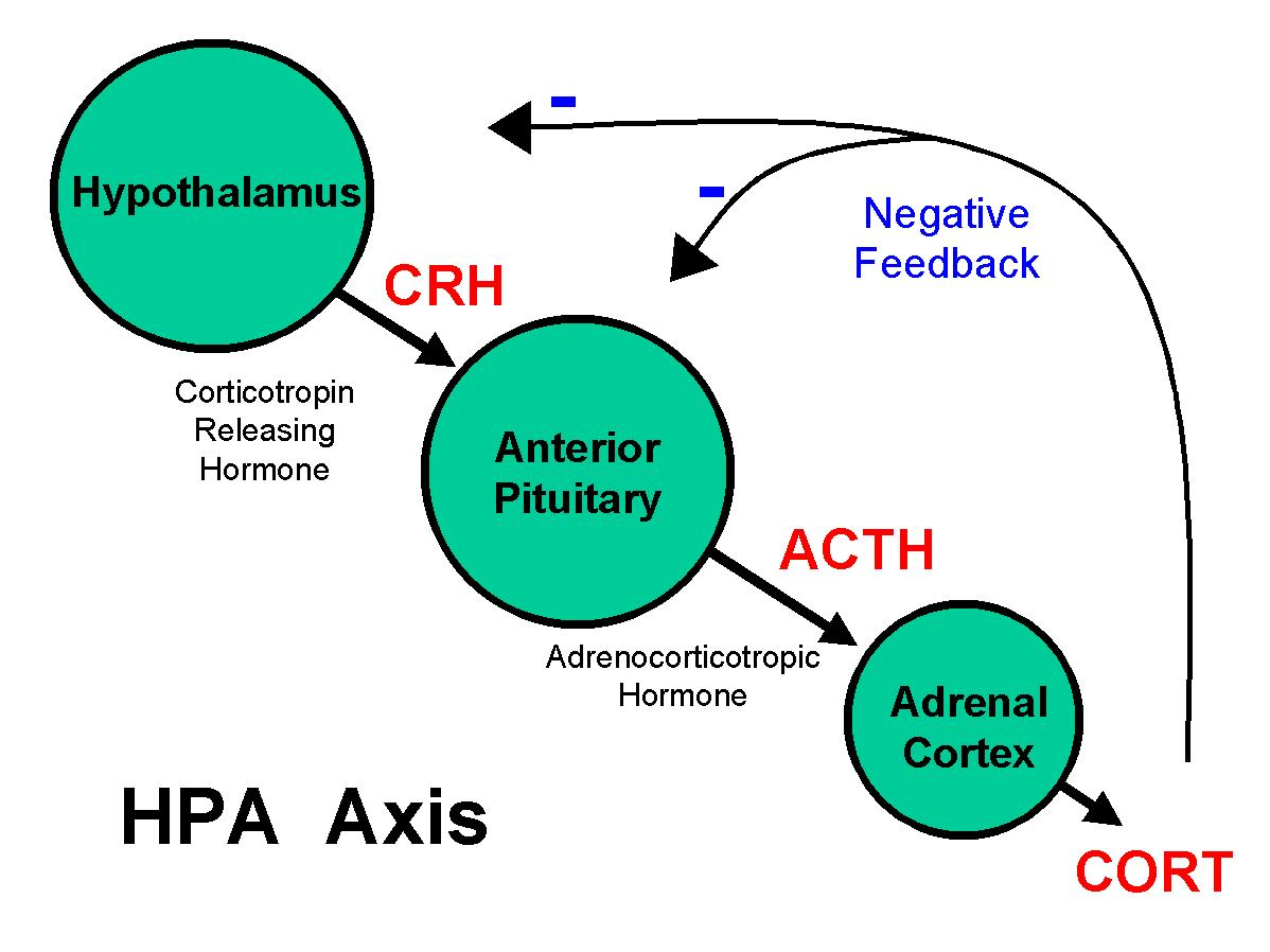 corticosteroids hormone imbalance